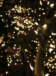 Fairy lights strung around a tree