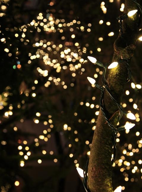 Christmas Lights Vagabond Days